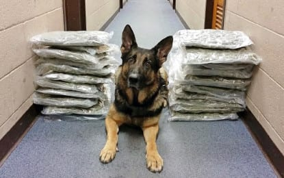 Several pounds of marijuana found in car