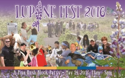 Annual Lupine Fest celebrates the Pine Bush