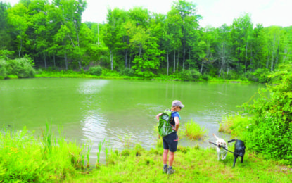 A walk in the woods: The Mohawk Hudson Land Conservancy offers several preserves for people to hike and enjoy nature