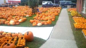 McKownville Pumpkin Patch