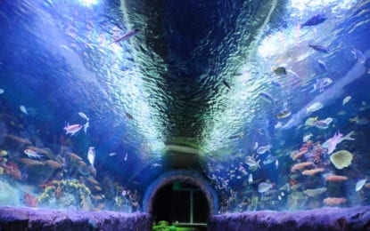 ViaPort Aquarium brings new form of entertainment to shopping mall