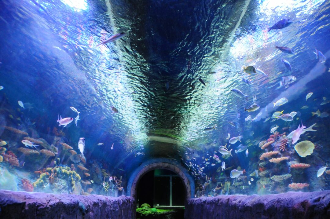 New Aquarium | Spotlight News Viaport Aquarium Brings New Form Of Entertainment