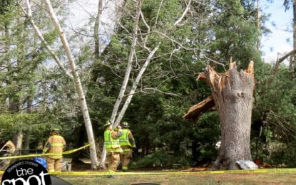 Felled tree knocks out power