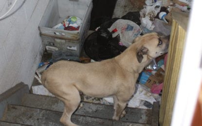 Sex offender arrested for not registering, leaving animals in squalor (w/photos)