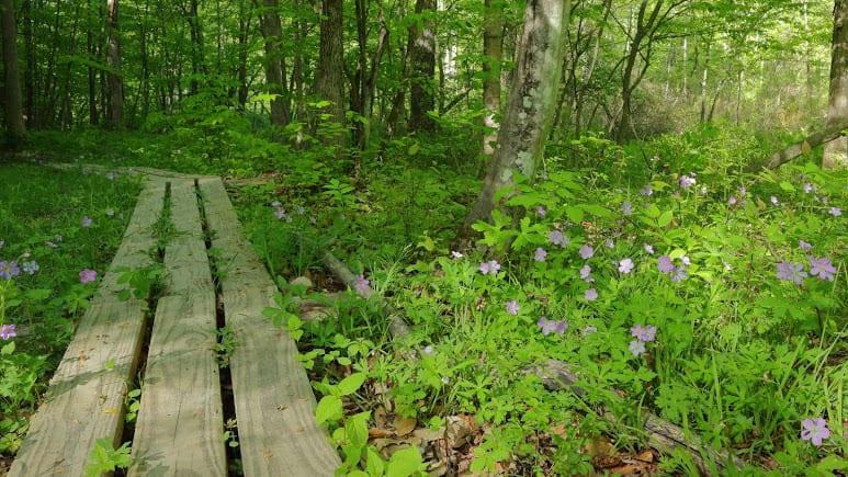Bethlehem officials evaluate open spaces for conservation purposes