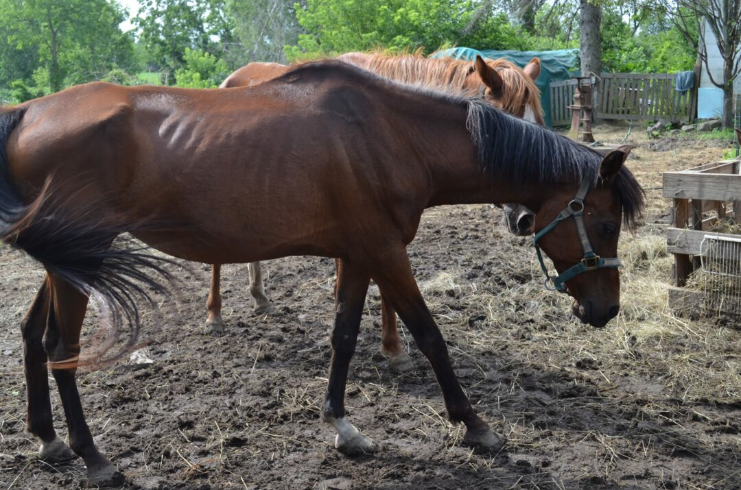 Scores of animals seized from Westerlo home