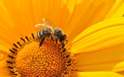 Protecting  the Pollinators