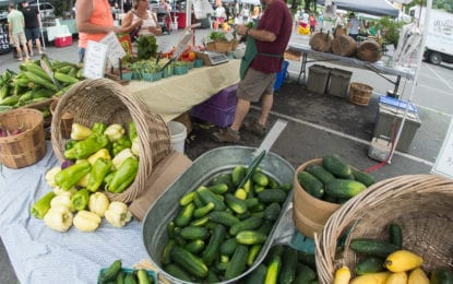 Despite 'unsettled' summer, produce still comes from the farm to the Colonie Farmers market (w/photo gallery)