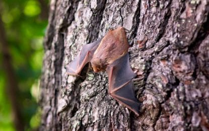 County urges residents to be mindful, take precautions against bats, rabies