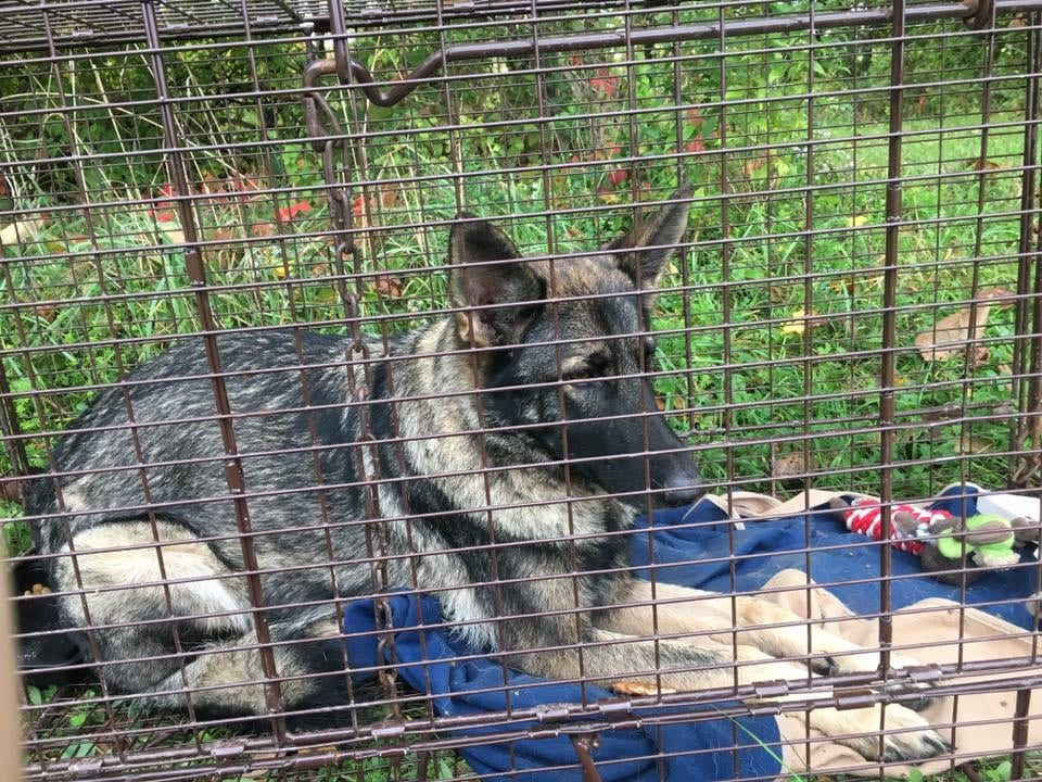 Bethlehem resident reunited with her beloved German Shepherd five days after dog ran off
