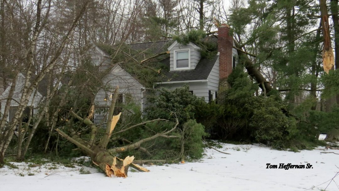 Tree collapses onto Delmar house on Winne Road