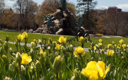 Albany's annual Tulip Festival kicks off this Mother's Day weekend