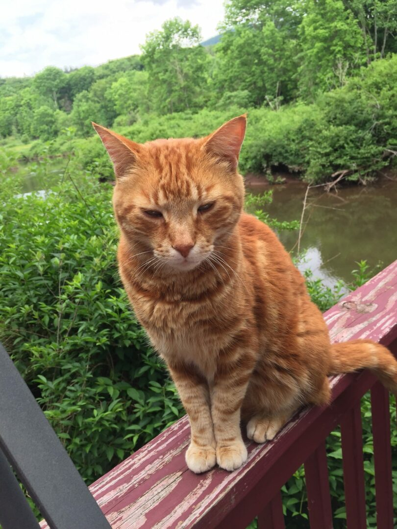 Delmar couple still searching for their missing cat, Roger