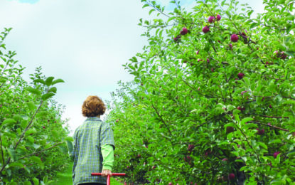 FAMILY NOW: Welcome to apple season